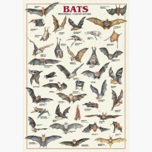 Εκπαιδευτικές Αφίσες - Bats