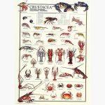 Εκπαιδευτικές Αφίσες - Crustacea