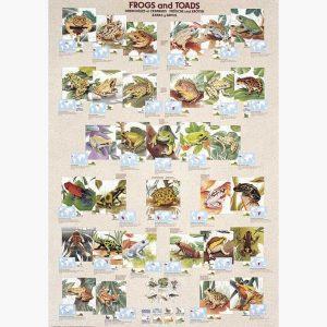 Εκπαιδευτικές Αφίσες - Frogs and Toads