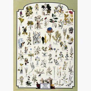 Εκπαιδευτικές Αφίσες - Medicinal Plants