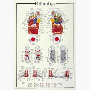 Εκπαιδευτικές Αφίσες - Reflexology