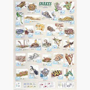 Εκπαιδευτικές Αφίσες - Snakes
