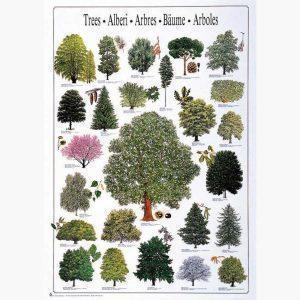 Εκπαιδευτικές Αφίσες - Trees