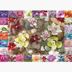 Puzzle - Orchids